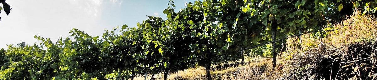 Weingarten Zeile